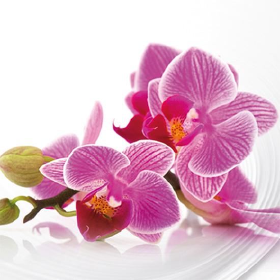 Bucato profumato con essenze Orchidea