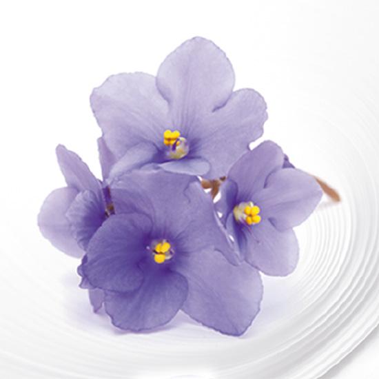 Bucato profumato con essenze Violetta