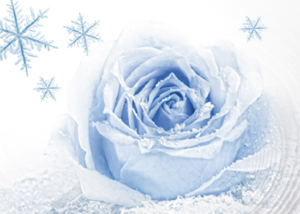 Bucato profumato con essenze Winter